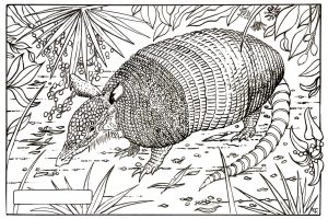 Linedrawing of an armadillo siting in a tropical jungle.