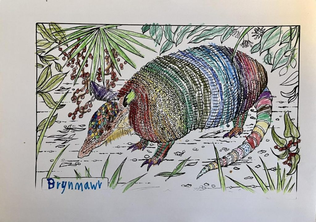 """Colouring page of an armadillo in the middle of foliage. Coloured in in different patterns in all the colours of the rainbow. The nametag on the left says """"Brynmawr""""."""