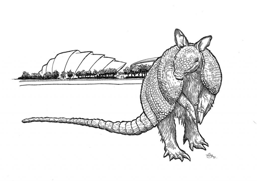 Ink drawing of an armadillo looking directly at the viewer. In the background the Armadillo Auditorium of the SEC can be seen behind a row of trees.